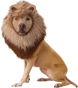 Dog costume that makes then look like a Lion