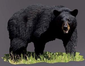 Giant Black Bear Wall Decal